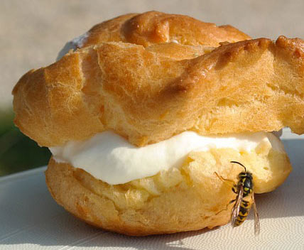 Wasp nibbling on a cream puff